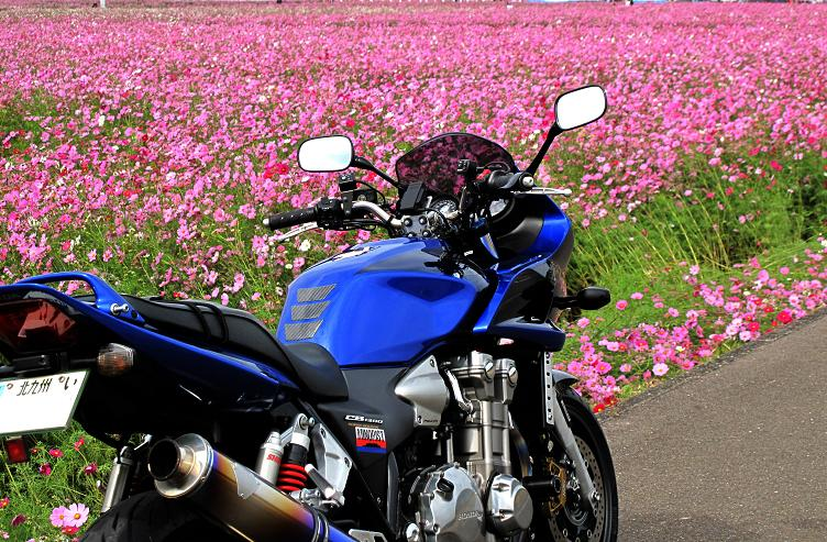11 カワセミ号も綺麗な風景が好きなのです.JPG