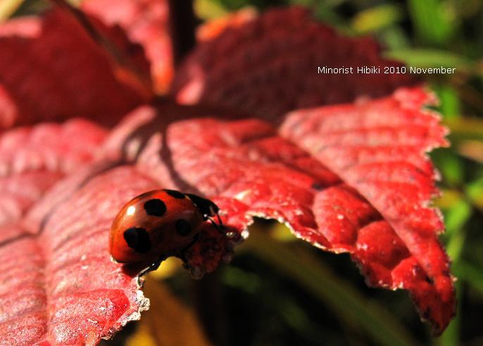 12 赤い葉っぱ.JPG