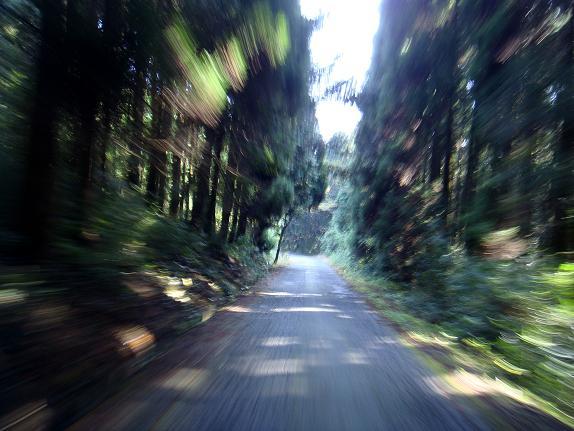 12林道を徐行中なんだけど・・・.JPG