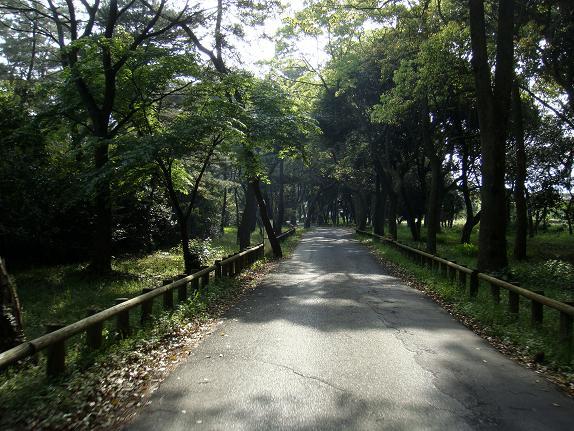 13 松原の端っこ.JPG