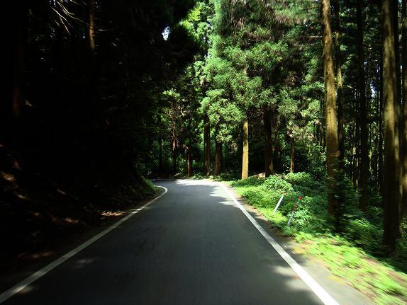 16 度々出てくる林道.JPG