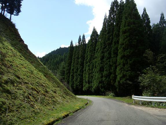 18 この頃から走る道は全て林道になります.JPG