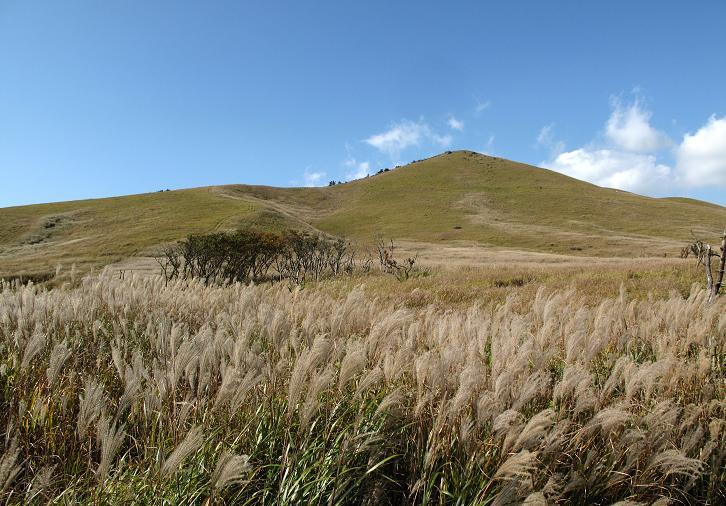 19 野焼き後まで緑の草原は見れない.JPG