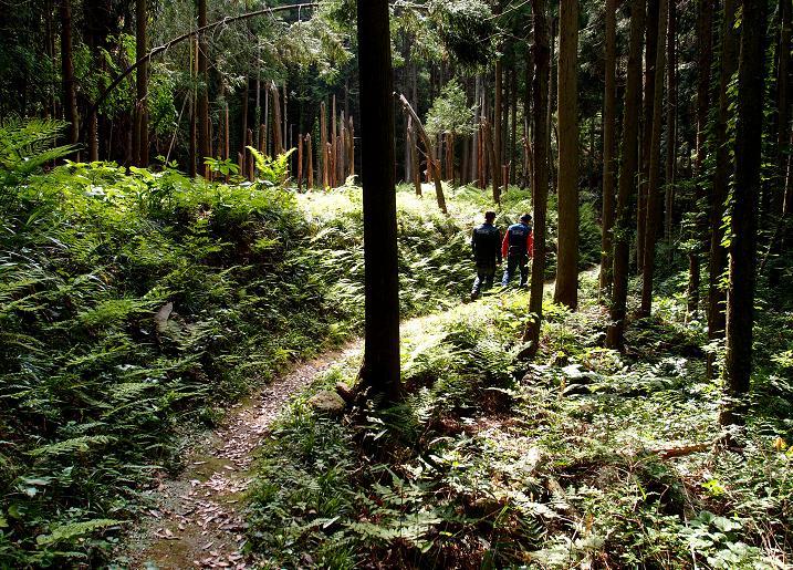 20 深い森へ.JPG