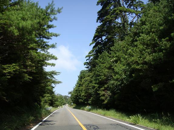 20 県道1号の赤松の森.JPG