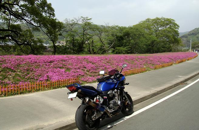 21 福岡初の芝桜の園らしい.JPG