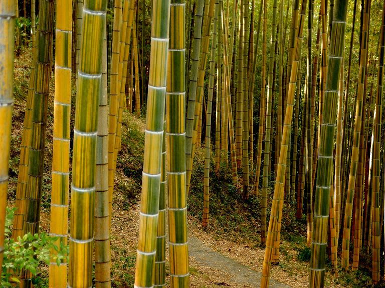 21 竹を見て綺麗って思うことってあまりない.JPG