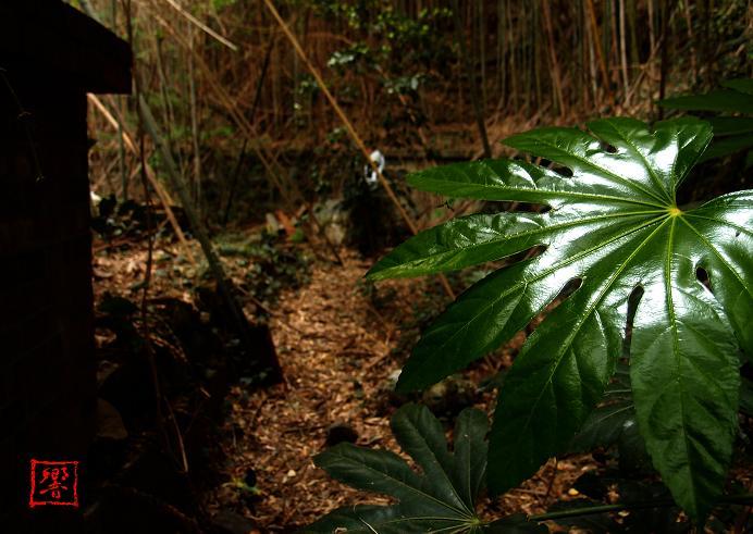 26 今度の場所もジャングルです.JPG