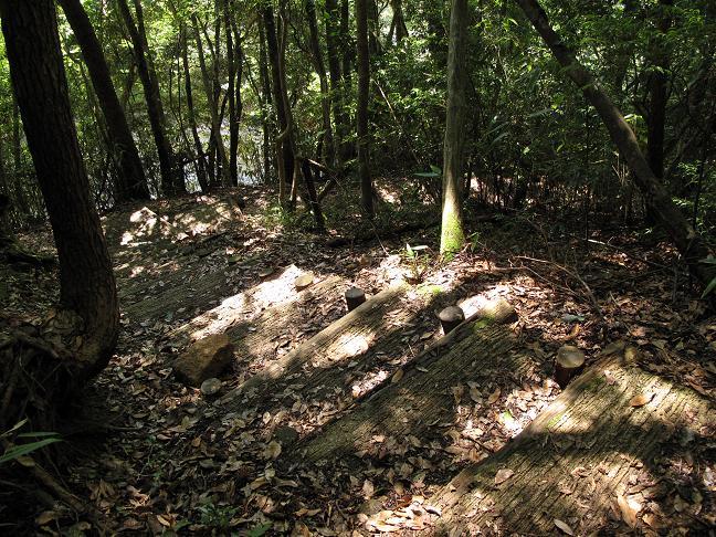 26 薄暗い森を下ります.JPG