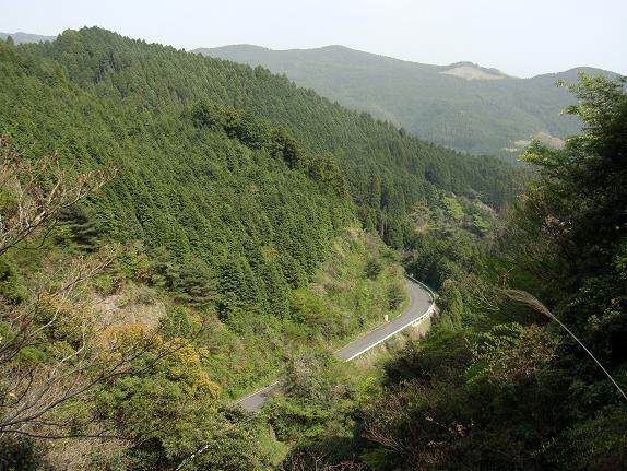 28 長い林道です.JPG