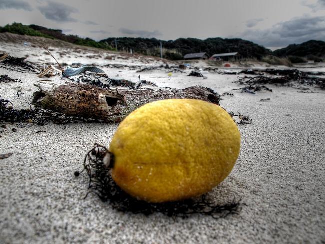 30 塩漬けのレモン.JPG