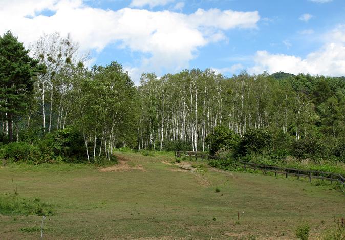 30 白樺の林.JPG