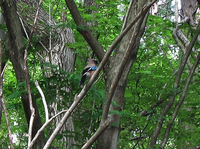 32 九州では見ない野鳥.JPG