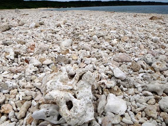 39 砂が全部サンゴです.JPG