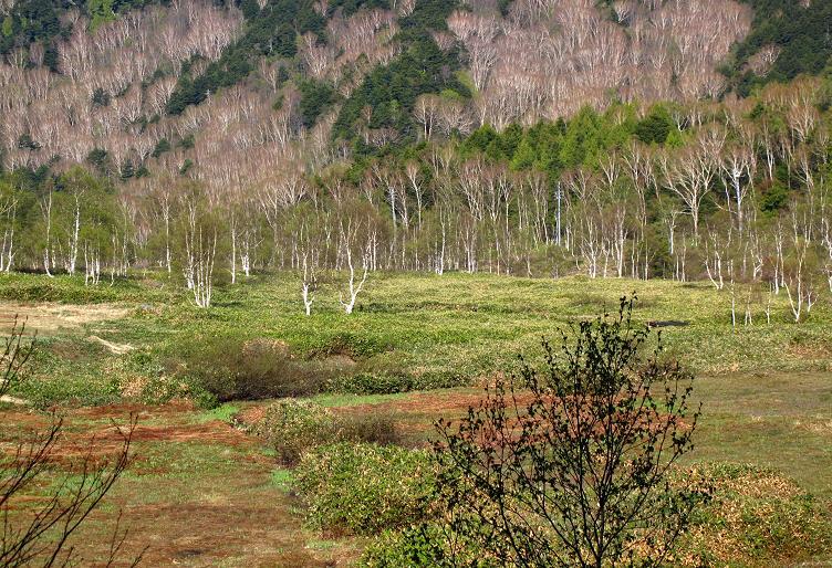 3 湿原です.JPG