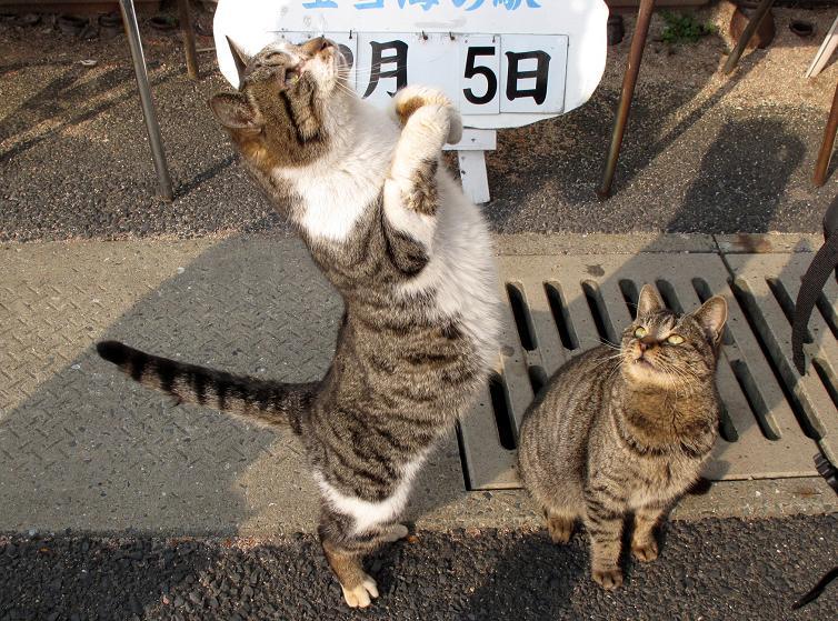 43 イメージアップキャンペーン中につき猫写真を.JPG