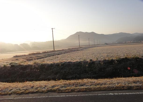 4 田んぼは霜で真っ白け.JPG