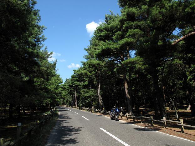 7 日本三大松原です.JPG