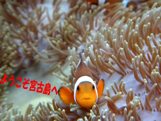 7 雑魚語で会話中.jpg