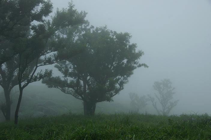 すっぽり霧の中.JPG