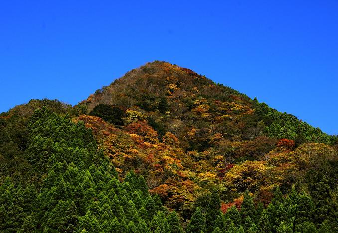 九州の紅葉.JPG