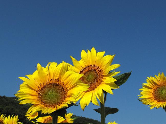 夏らしい花.JPG