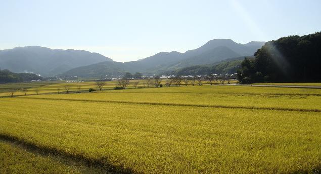 宇佐の田園風景.JPG