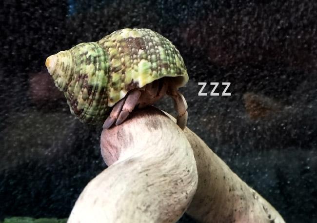 木の上で寝るのか?.jpg