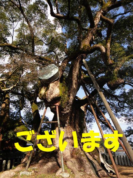 本庄の大楠神社で初詣.jpg