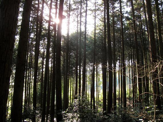 森へ.JPG