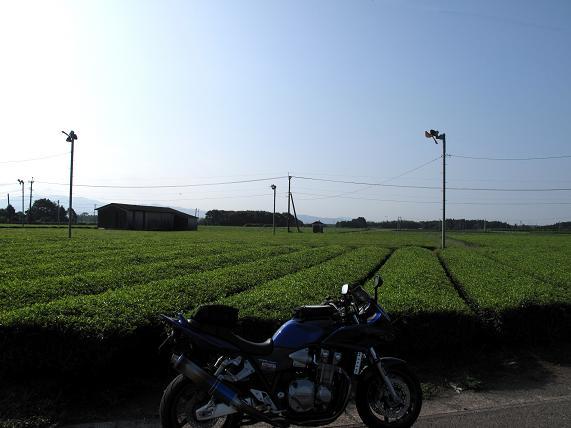 母智丘の近所の茶畑.JPG
