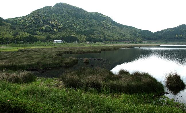 湿原です.JPG