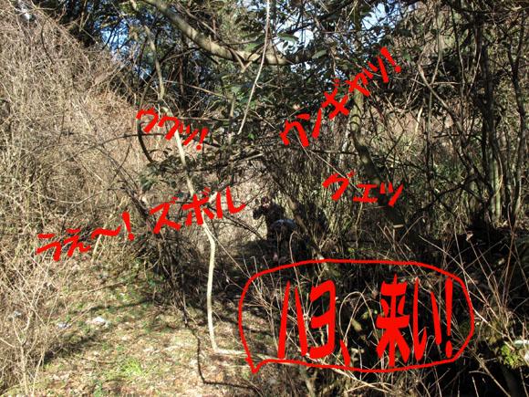 藪と格闘するマイナリスト.jpg