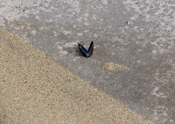 蝶かと思った.JPG