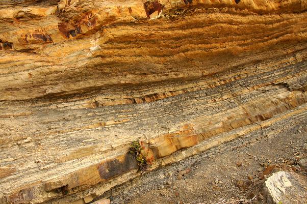 貝の化石がありそう.JPG