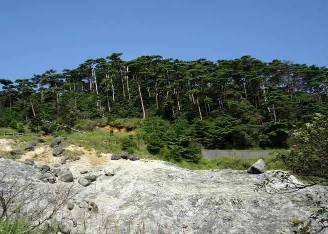 赤松の森がとっても綺麗です.JPG
