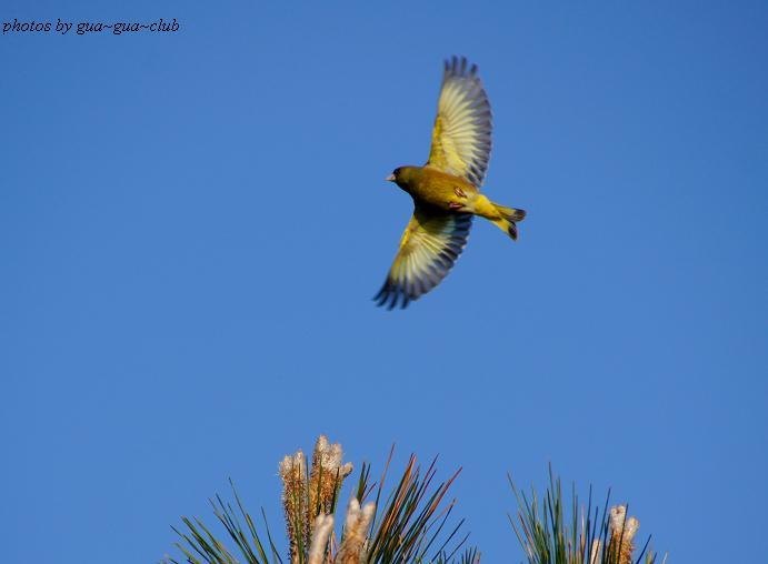 飛び立つ瞬間はどんな鳥でも美しい.JPG