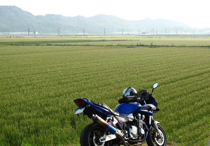 1 二丈の麦畑.JPG