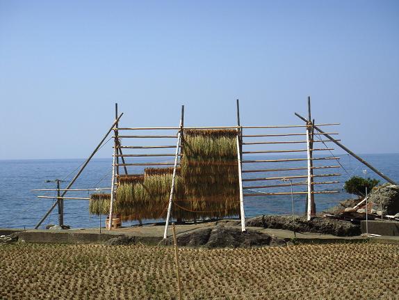 25 潮風で干す米って珍しい.JPG