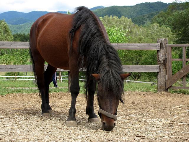 31 木曽馬です.JPG