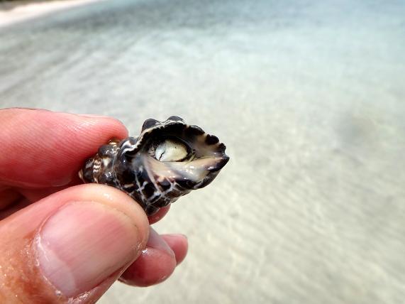 31 貝殻のお土産と思ったら先住民が・・・.JPG