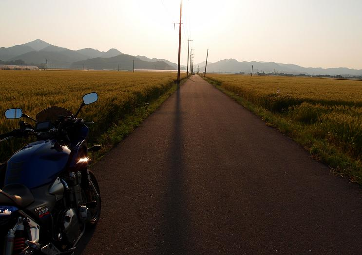 36 麦畑.JPG