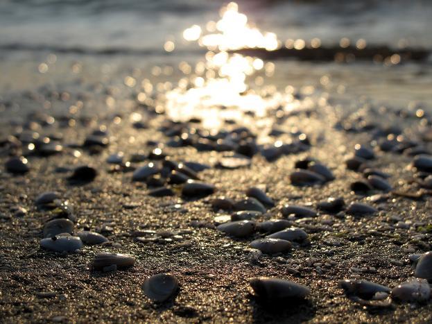 41 砂浜には貝がいっぱい.JPG