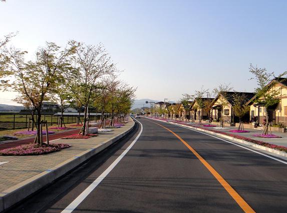 48芝桜が綺麗な県道.JPG