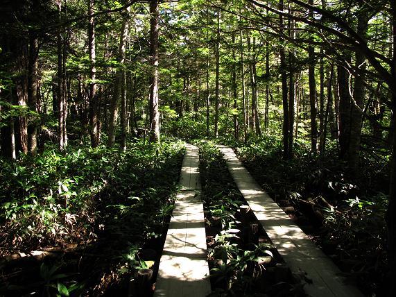 8 涼しい森の道.JPG