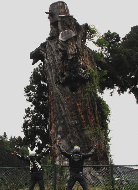 9 巨木からパワーを貰います.JPG