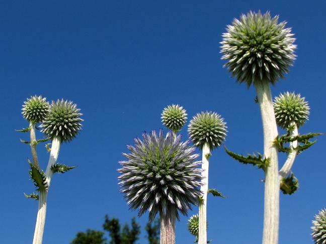ふかいの植物.JPG