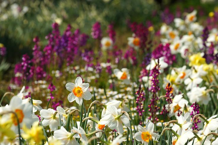 春らしい花達.JPG