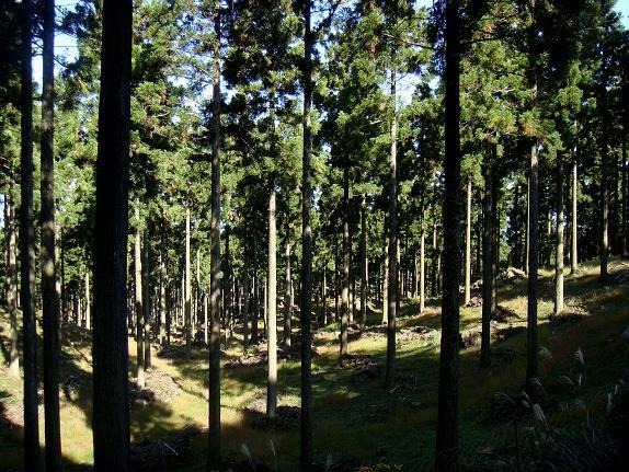 杉林を抜けると・・・.JPG
