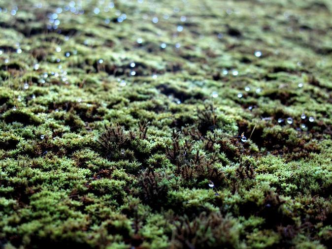 森の絨毯.JPG